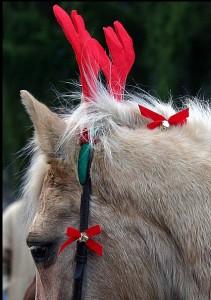 Christmas horse wearing antlers