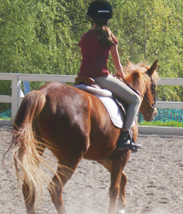 Girl taking a horse riding lesson.  English riding.